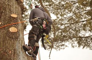 Lummi Island Washington Tree Removal