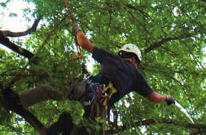 Nooksack Tree Trimming