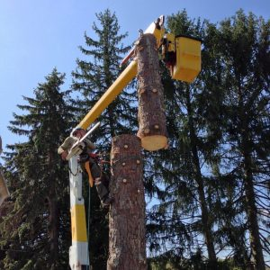 Tree Removal Lummi Island Washington