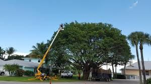 Tree Trimming Lopez Island