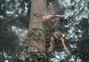 Tree Trimming in Taholah